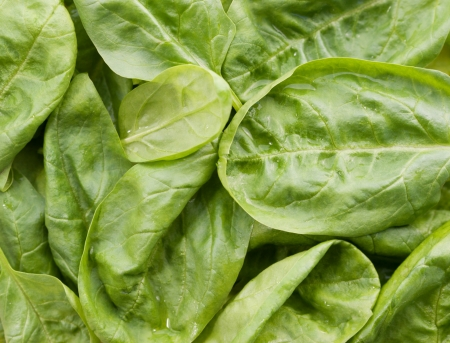 Fresh moist spinach background  Stock Photo