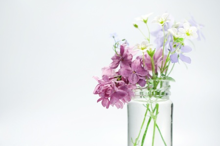 cut flowers: Beautiful spring flowers in a vase
