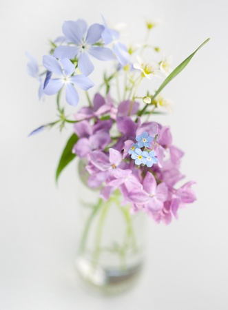 Beautiful spring flowers in a vase
