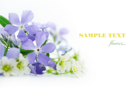 spring flowers: Spring flowers on white background.