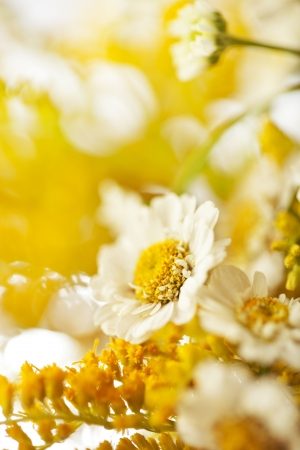Beautiful daisies flowers close-up background Stock Photo - 14842389