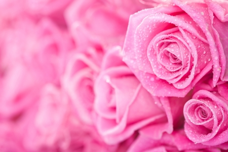 Beautiful pink roses background, bridal bouquet photo