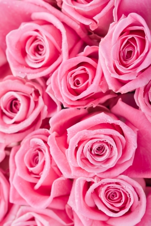 Beautiful pink roses background, bridal bouquet Stock Photo - 14842386