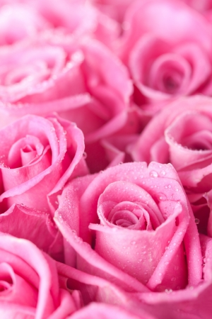 Beautiful pink roses background, bridal bouquet Stock Photo - 14953865