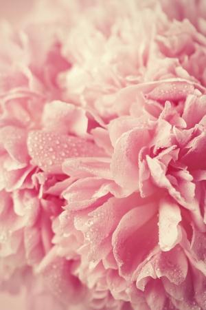추상 분홍색 웨딩 꽃 배경 스톡 콘텐츠