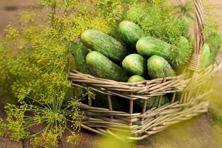 Harvest cucumbers and dill in a basket on the wooden background Stock Photo - 17925528