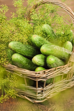 Harvest cucumbers and dill in a basket on the wooden background Stock Photo - 17925525