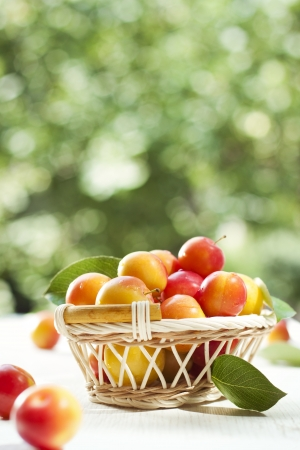 Fresh ripe plums in basket outdoors Stock Photo - 18372116