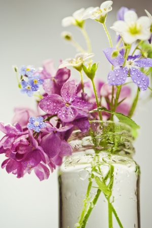 Beautiful spring flowers in a vase on white background Stock Photo - 19009140