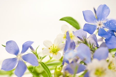 Bouquet of spring flowers on a white background Stock Photo - 19008991