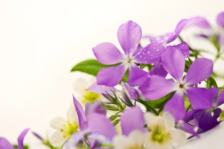 forget me not: Bouquet of spring flowers on a white background