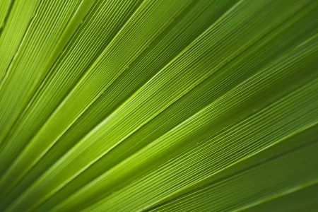 Green palm leaf texture for background. Stock Photo - 20461844