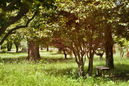 Wooden bench in the lovely park Stock Photo - 21085780