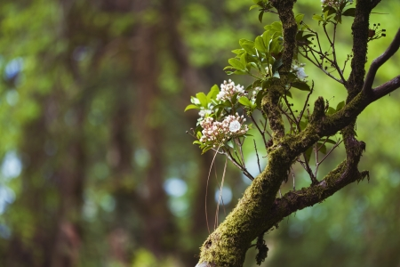 Conceptual photo of beautiful flowers on old branch Stock Photo - 21085789
