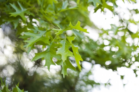 Fresh green leaves in the spring. Stock Photo - 21085863