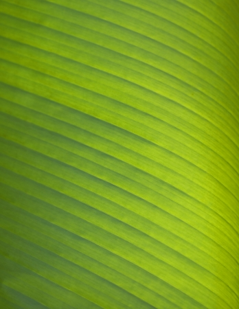 Green palm leaf texture for background Stock Photo - 21085876