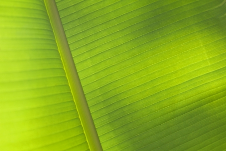 Green palm leaf texture for background  Stock Photo - 21085877