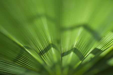 Green palm leaf texture for background Stock Photo - 21085879