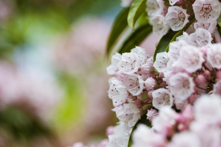 Beautiful spring pink flowers background Stock Photo - 21085923