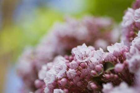 Beautiful spring pink flowers background Stock Photo - 21085924