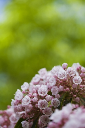 Beautiful spring pink flowers background Stock Photo - 21085926