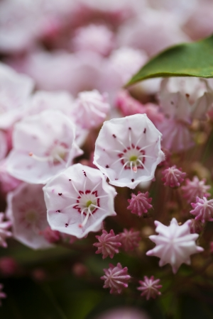 Beautiful spring pink flowers background