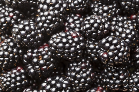 Ripe fresh blackberry background Stock Photo - 21702814