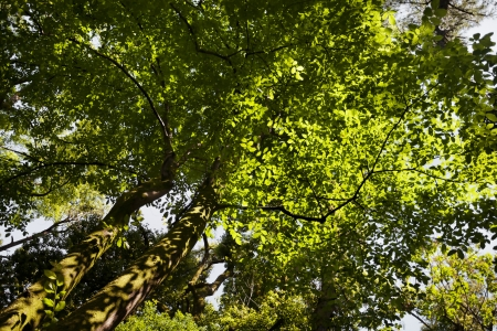 Green tree background in summer Stock Photo - 21702833