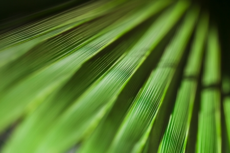 Green palm leaf texture for background. Stock Photo - 21702836