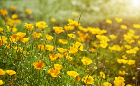 Yellow flowers in summer meadow background Stock Photo - 21702847