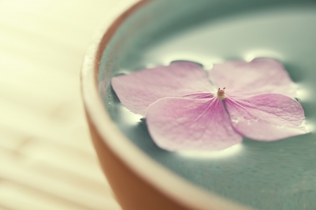 close up: Close up of flowers floating in bowl of water