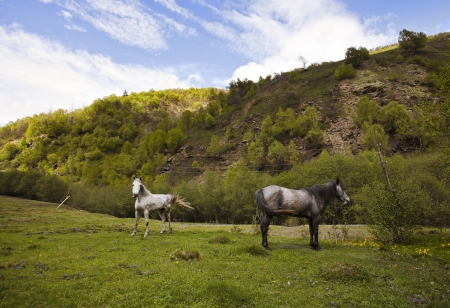 Two horses pasturing in mountains at summer photo