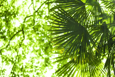 palm garden: Green palm leaf on green leaves background. Stock Photo