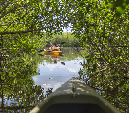 Kayaking in mangrove tunnels in Everglades