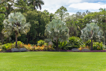 Beautiful garden with nice lawn and palms