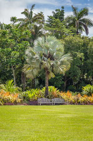 Beautiful garden with nice lawn and palms photo