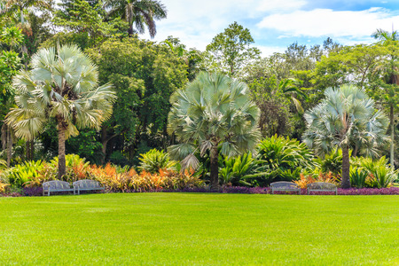 landscaped garden: Beautiful garden with nice lawn and palms