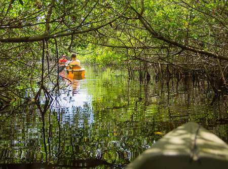 Kajakken in de mangrove tunnels in het Everglades National Park, Florida, Verenigde Staten