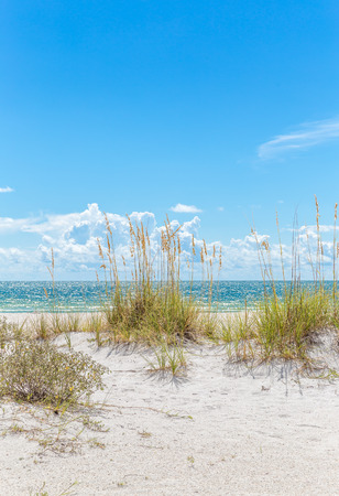 sandy beach: sunny St. Pete beach with sand dunes and blue sky in Florida Stock Photo