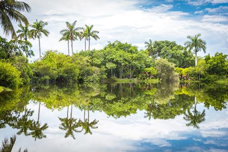 フェアチャイルド熱帯植物園、マイアミ、フロリダ、米国。湖の反射が美しいヤシの木 写真素材