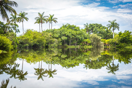 Fairchild tropical botanical garden, Miami, FL, USA. Beautiful palm trees with reflection in lake
