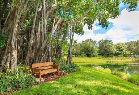 Beautiful Banyan tree and green lawn