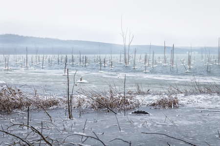 frozen lake: Winter lake with frozen grass with snow