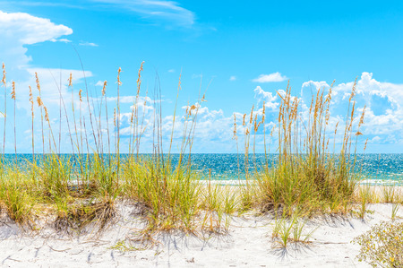 pete: sunny St. Pete beach with sand dunes and blue sky in Florida Stock Photo