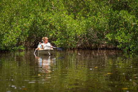 EVERGLADES, FLORIDA, USA - AUGUST 31: Tourist kayaking in mangro