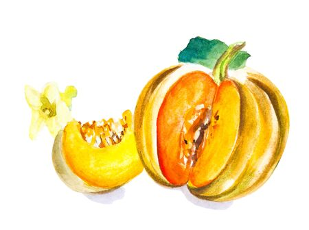 Pumpkin watercolour drawing isolated on white background
