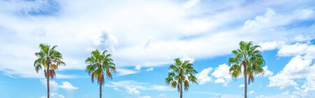 Panorama of four Palm trees on blue sky background