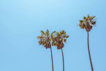 Vintage look of Palm trees on blue sky background Stockfoto - 128617279
