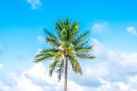 Palm tree on blue sky with clouds Banco de Imagens