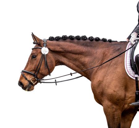 Bay horse isolated on white Stock Photo
